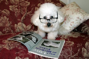 Picture of dog with glasses