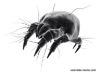 dust mite, acarine, allergy, bed, bite, bug, dirty, dust, dusty